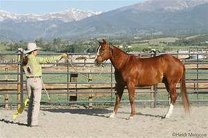 Become Your Horse's Herd Leader through Groundwork