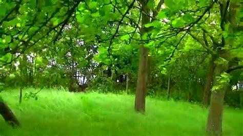 moment nature green garden grass windy orchard trees
