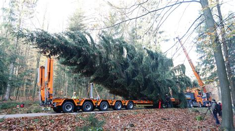 top 28 weihnachtsbaum entsorgen dresden weihnachtsbaum
