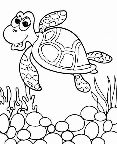 Coloring Ocean Turtle Animals Gambar Kura Fish