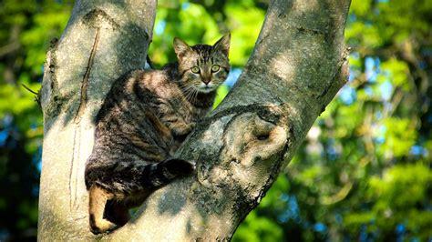 cat sitting  tree hd wallpapers
