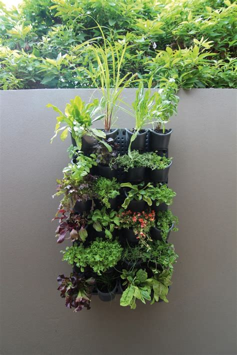 Vertical Garden by Greenwall Vertical Gardening Holman Industries