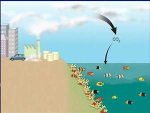 Learn About 5 Scary Consequences To Ocean Acidification