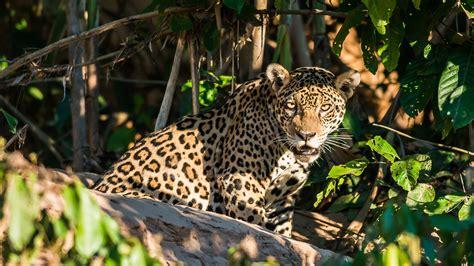 top  wildlife  spot   amazon