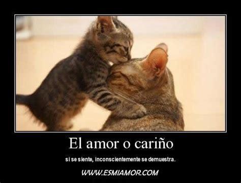 gatitos lindos  frases bonitas de amor  descargar