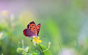 Beautiful Butterfly Wallpapers HD Pictures | One HD ...