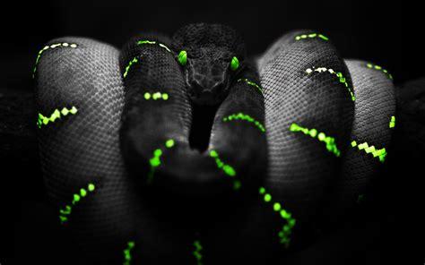 Free Download 40 Dark Wallpaper Images In 4k For Desktop