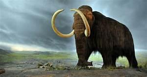 10 Extinct Animals Alleged To Still Be Alive Listverse