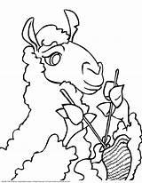 Llama Coloring Printable Knitting Drawing Face Guinea Pig Hedgehog Getdrawings Olds Flower sketch template