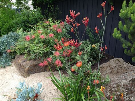 brightly coloured native garden  melbourne desert