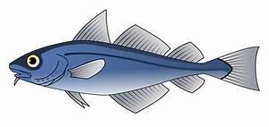 Fish | Free Stock Photo | Illustration of a blue codfish ...