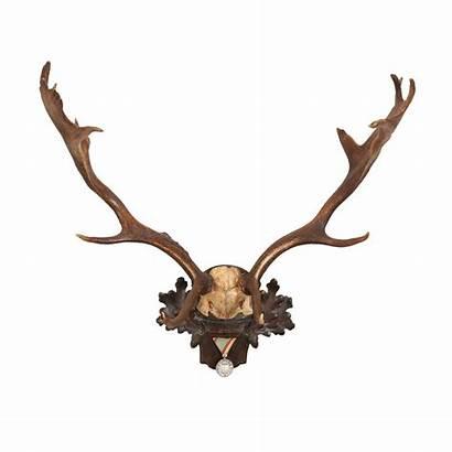 Trophy Habsburg Forest Fallow Deer Plaque Veteran