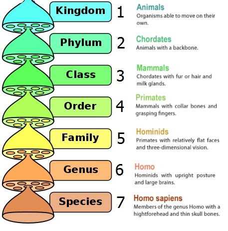 classification  living organisms biology notes