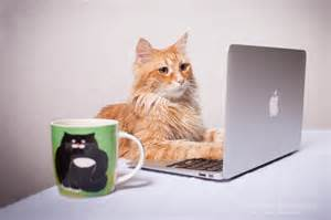 cat careers cat animals photos