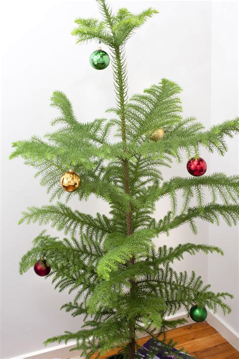 free stock photo 8667 real christmas tree with colourful