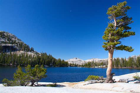 Yosemite National Park Notesfromcamelidcountry