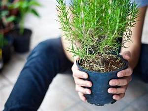 Pflanzen Bewässern Urlaub : 282 besten garten balkon pflanzen bilder auf pinterest ~ Michelbontemps.com Haus und Dekorationen
