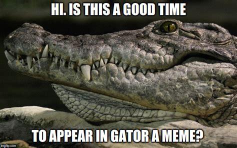 Gator Meme - gator meme quite about time imgflip