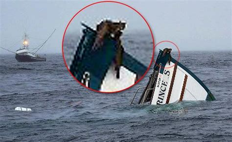 World Cat Boat Sinks by Cats Swim To Safety After Tuna Boat Explodes Ny Daily News