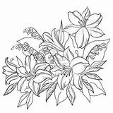 Flower Coloring Pages Lily Outline Drawing Flowers Sketch Painting Printable Sketchite Fabric sketch template
