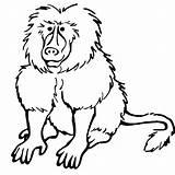 Baboon Coloring Getcolorings Printable sketch template