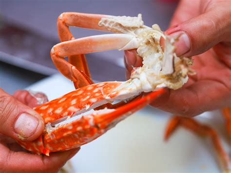 crab eat maryland wikihow steps step