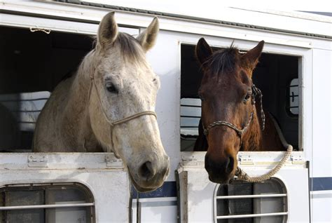 how are horses horse trailer types which one is right for you crossroads trailer sales blog