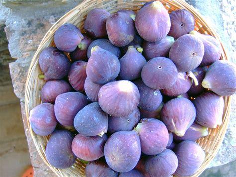 cuisiner des figues la figue faux fruit mais vrai plaisir recettes de figues