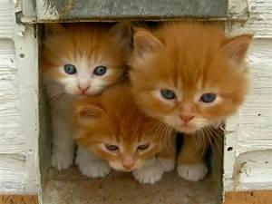 Türschutzgitter Mit Katzenklappe : katze an katzenklappe gew hnen so klappt das freig nger training ~ Whattoseeinmadrid.com Haus und Dekorationen