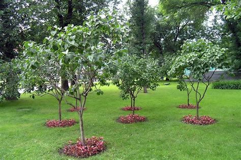 22 plain garden design ideas with fruit trees izvipi