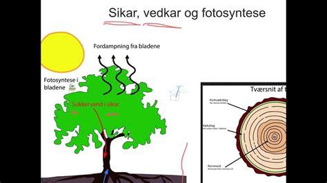 sikar vedkar og fotosyntese youtube