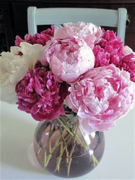 How To Revive Roses In A Vase - 2 50 peonies plus great tips on how to revive wilted