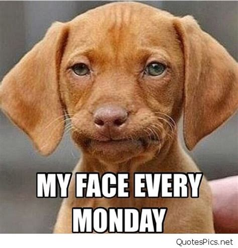 Dog Face Meme - funny monday dog saying quotes memes photos