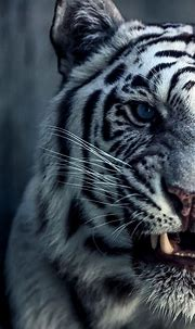 #wallpaper #iphone #tiger #forTiger wallpaper for iPhone ...