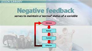 What is Negative Feedback in Biology? - Definition ...