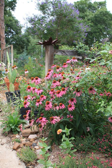 native  top  native plants  houston