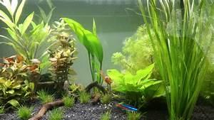 Aquarium Fische Süßwasser Liste : aquarienpflanzen kaufen einsetzen und pflegen s wasseraquarium fische pflanzen deko kosten ~ A.2002-acura-tl-radio.info Haus und Dekorationen