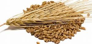 Super Food Grain