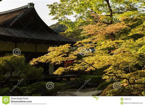 rote bäume garten gr 252 ne ahornb 228 ume im japanischen garten stockfoto bild