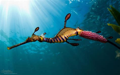 Sea Animal Wallpaper - sea animals wallpapers wallpaper cave
