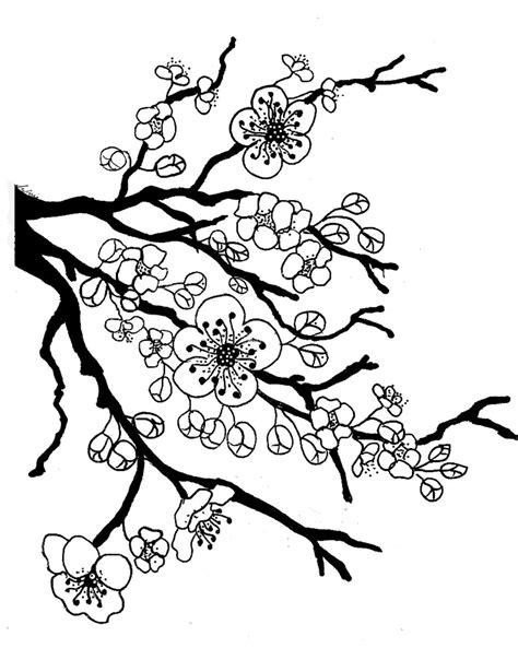 cherry blossom color cherry blossom coloring pages coloring home