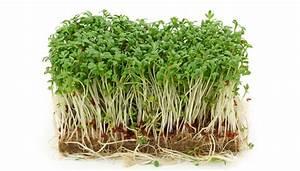 Comment Faire Germer Une Graine : graines germees comment faire ses germinations et ses ~ Melissatoandfro.com Idées de Décoration