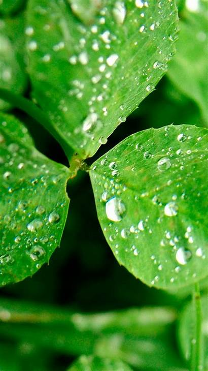 Water Iphone Clover Spring Wallpapers Drops Dew