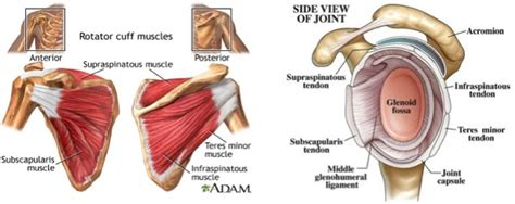 Common Rotator Cuff Problems And Five Exercises To Help