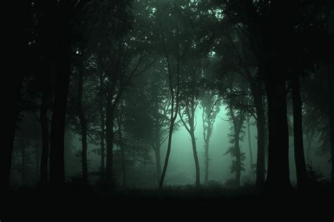 Forest At Night Pictures Weneedfun