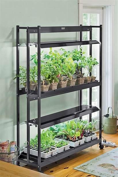 Grow Growing Plants Garden Indoor Indoors Lettuce