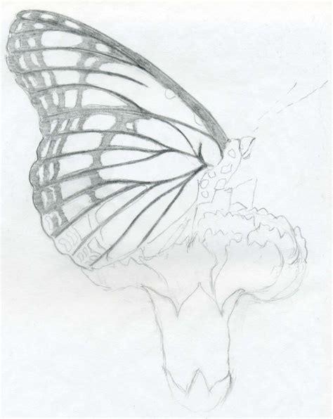 butterfly drawing  getdrawingscom