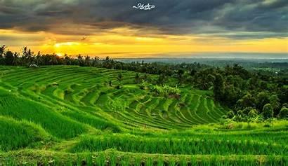 Pemandangan Sawah Gambar Yang Desa Dan Indah