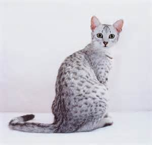 cool cat breeds 14 but cool cat breeds