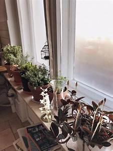 Zimmerpflanzen Für Schlafzimmer : einrichtungsidee f r sonnige fensterbank im schlafzimmer ~ A.2002-acura-tl-radio.info Haus und Dekorationen